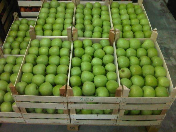 По форме яблоки Мутсу округлые