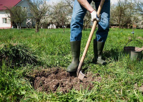 Для посадки яблони следует выбирать ровные места