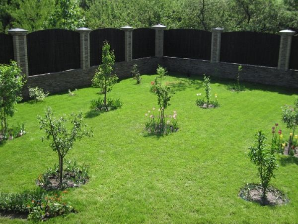 Летом и весной деревьям необходимо еженедельный полив