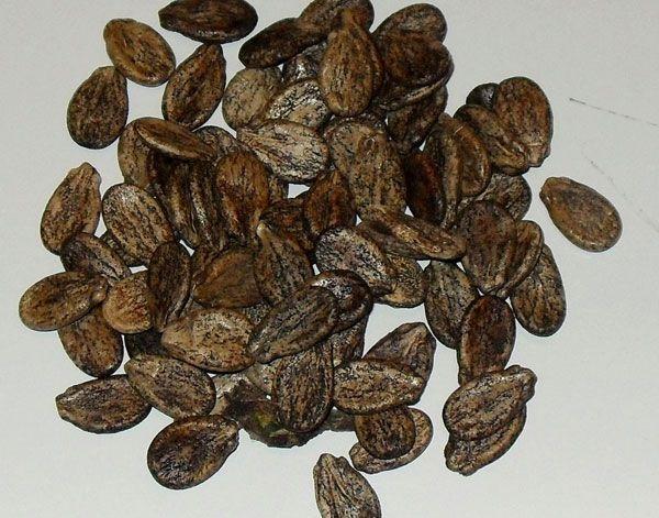 Перед посадкой семена нужно подержать в соленой воде