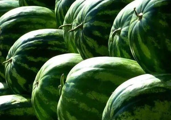Сухая плодоножка арбуза не всегда сигнализирует о дозревании
