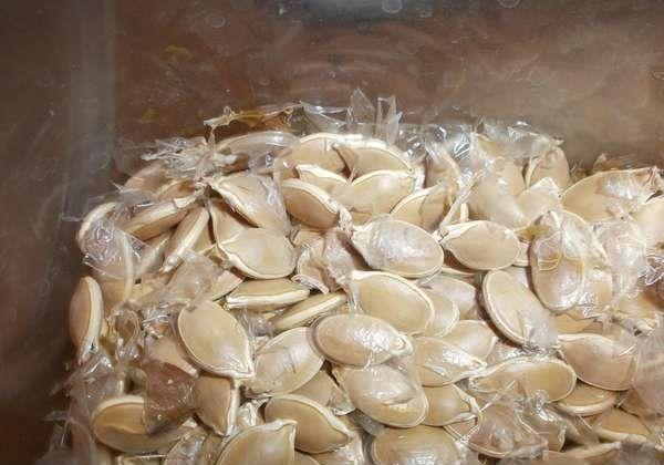 Перед посадкой семена тыквы помещают в раствор марганцовки
