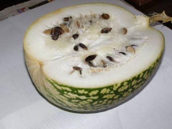 Белое чудо – это экзотический сорт