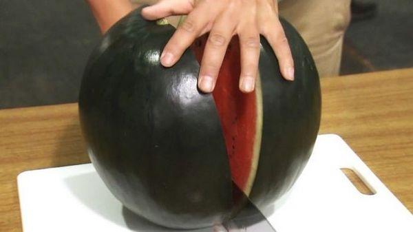 Особенностью арбуза Сахарная Молния является его холодостойкость