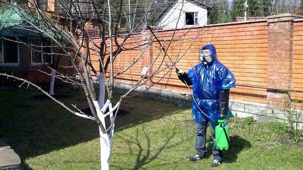 Обработка деревьев проводится в защитном костюме