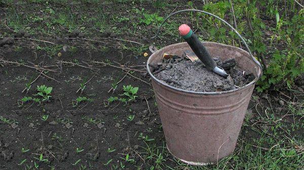 Без подкормки тыква в открытом грунте не вырастет