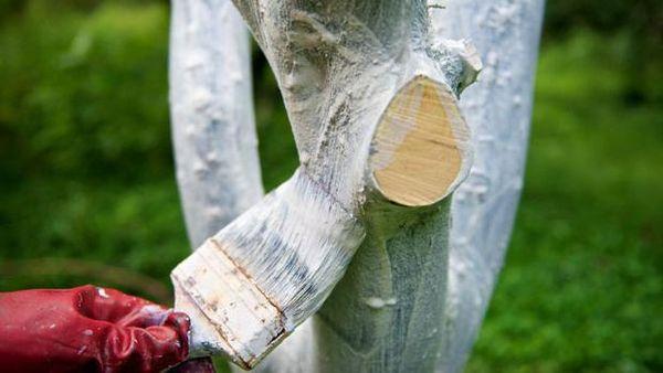 Опытные садоводы советуют белить деревья 3 раза в год
