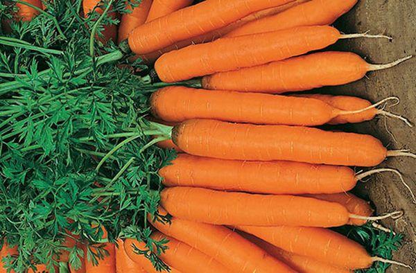 Амстердамская морковь имеет цилиндрическую форму