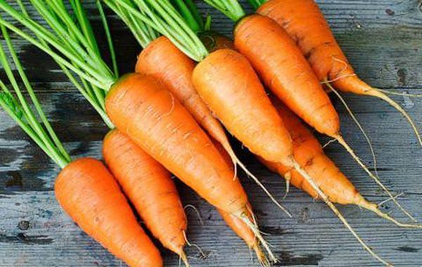 Морковь Каротель относится к среднеранним сортам