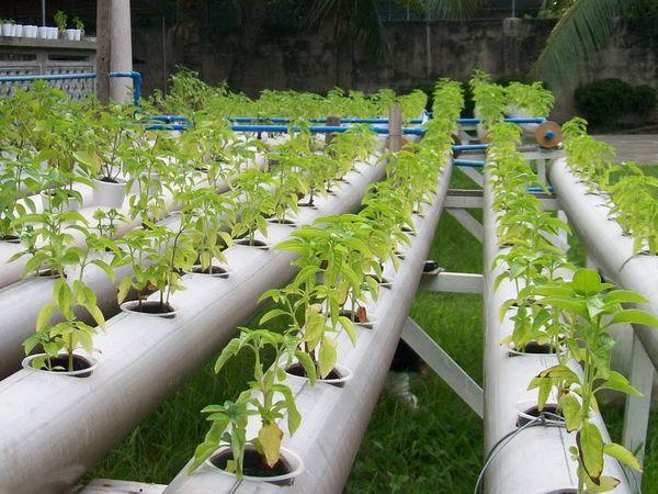 Растение должно расти вертикально