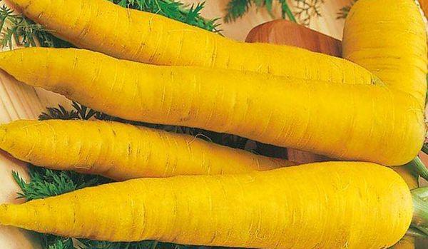 Морковь Еллоустоун содержит много лютеина