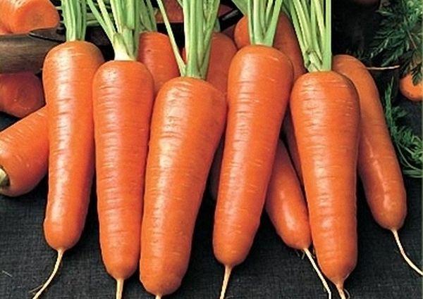 Морковь Каротель нуждается в регулярном поливе