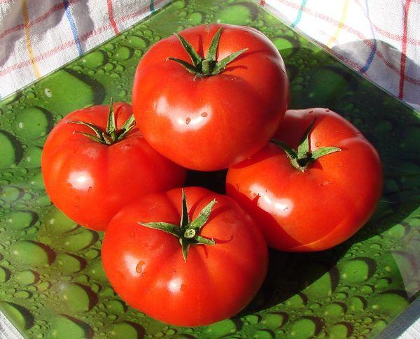 Популярный сорт томатов Аляска