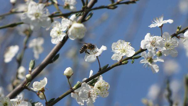 Обычно деревья опыляются насекомыми или ветром