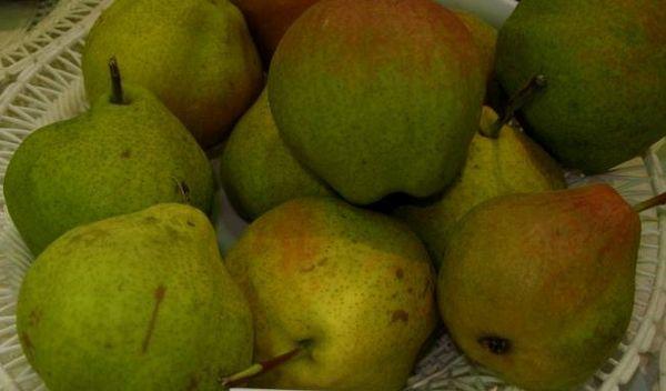 Плоды груши сорта Пермячка хранятся недолго