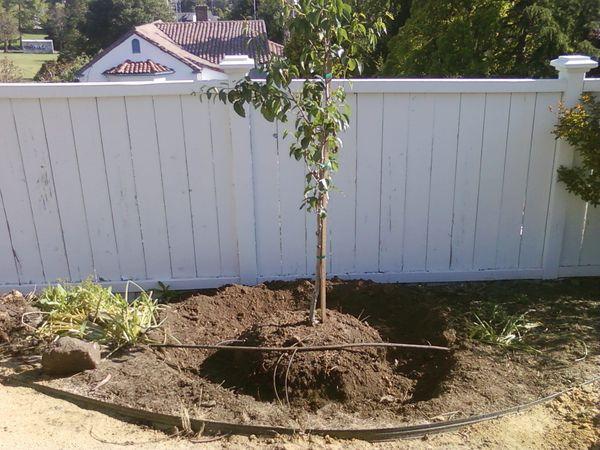 Правильно посаженное дерево – залог успешного роста и развития