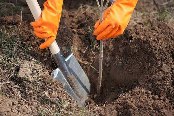 Посадка и уход – два важных момента в садоводстве