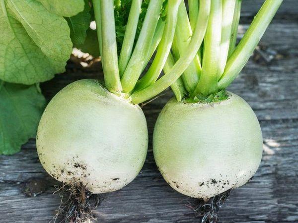 В корнеплоде содержится много полезных веществ