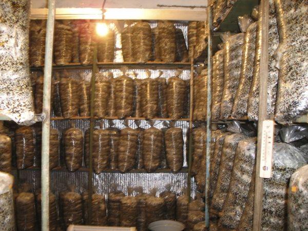 Подвал для выращивания грибов