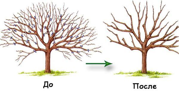 Осеняя обрезка грушевого дерева