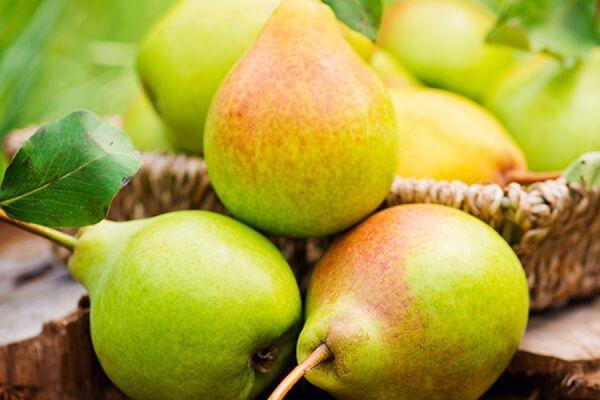 Молодую грушу необходимо регулярно поливать