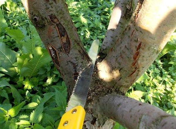 Используйте лунный календарь для планирования подрезания деревьев
