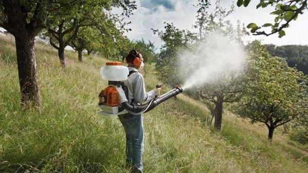 Опрыскивание вишни от вредителей и заболеваний