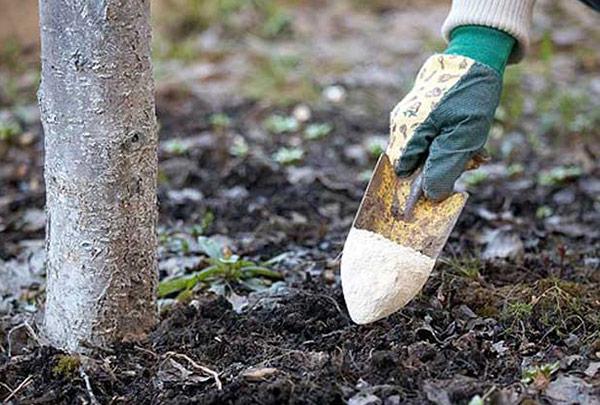 Весенняя подкормка растений комплексными удобрениями