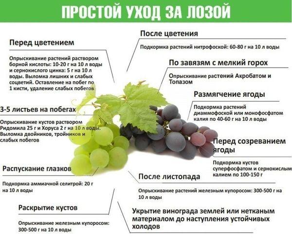 Правила подкормки винограда