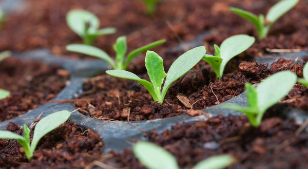 Растению требуется 8 часов света