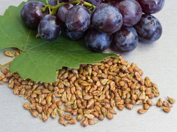 Из косточки могут вырасти кислые и мелкие плоды