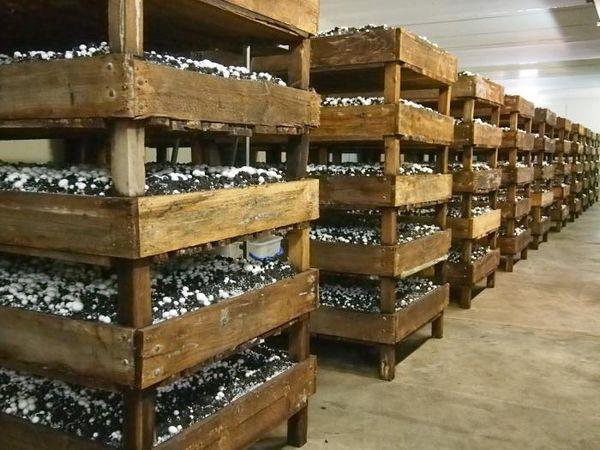 Стартовый капитал для бизнеса на грибах - 200 тыс. руб.