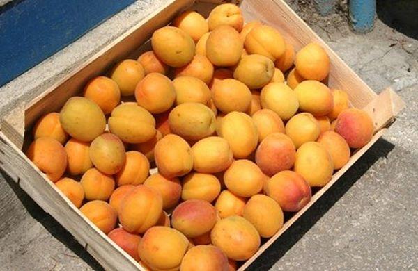 Хранить абрикосы можно в деревянном ящике