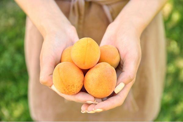 Бай способен порадовать плодами массой до 40 г