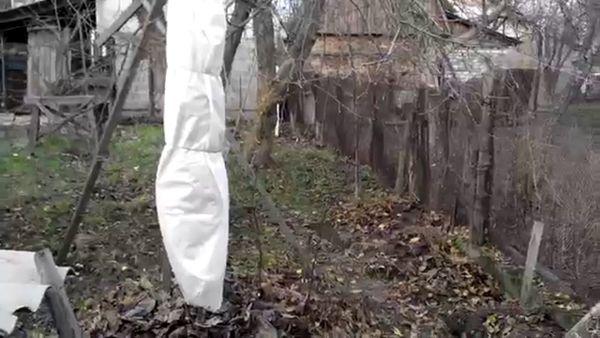Персики на зиму необходимо укрывать