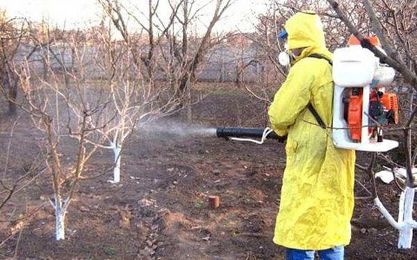 Для профилактики сада от болезней нужно проводить опрыскивание