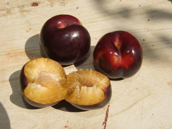 Сливовый – это гибрид персикового фрукта и сливы