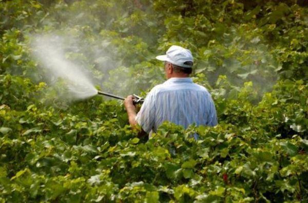 «Тиовит Джет» относят к нетоксичным веществам