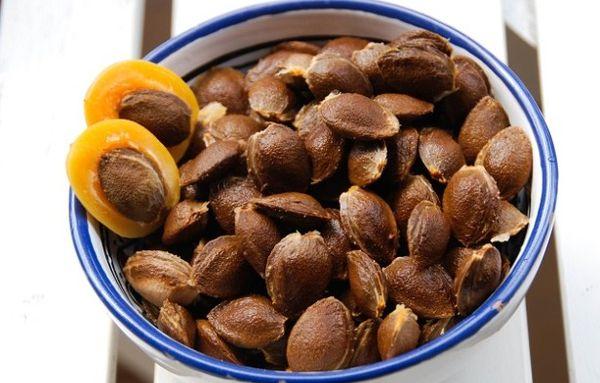 Выращивание абрикоса из косточки предполагает отбор семян