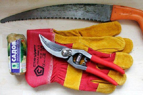 Инструменты для обрезки крыжовника