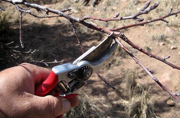 Обрезка пораженных ветвей перед опрыскиванием