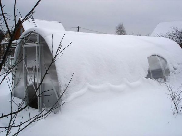 открывать ли теплицу зимой