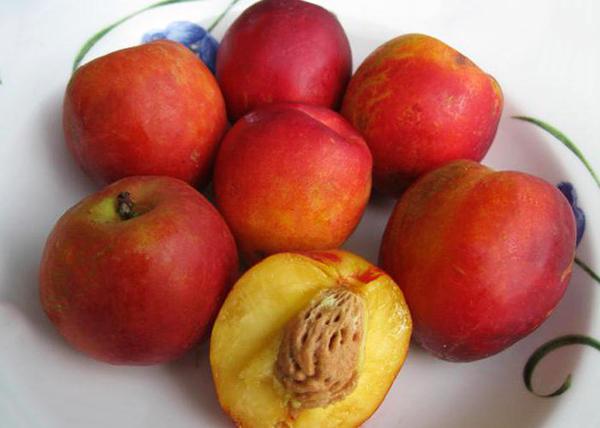 Плоды персиковой сливы достаточно большие
