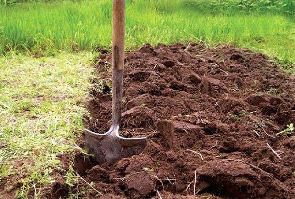 До наступления сезона дожей необходимо перекопать участок
