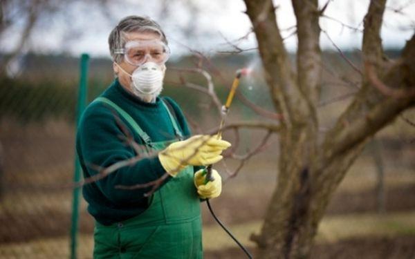 Обработка деревьев химическими препаратами
