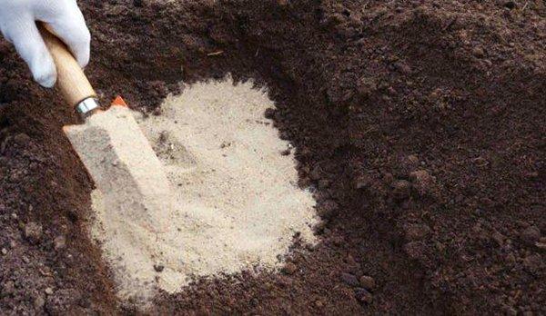 Внесение песка - лучший способ улучшить структуру глинистой почвы