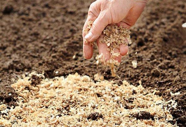 В качестве органических удобрений можно использовать древесные опилки