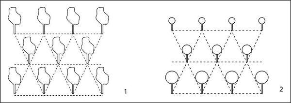 Правила размещения деревьев на участке