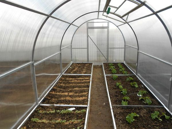 Теплицы создаются для выращивания разнообразных теплолюбивых культур