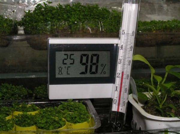 В теплице нужно следить за температурой